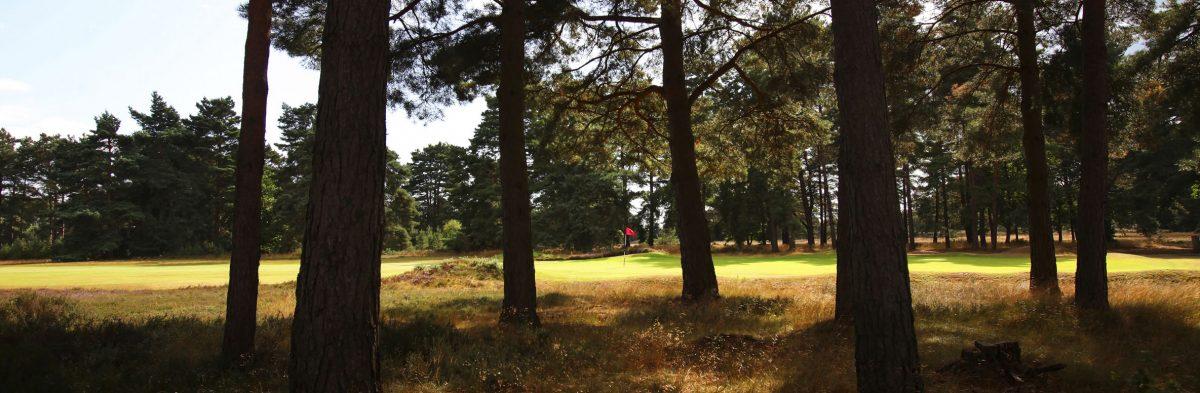 Hankley Common Golf Club No. 8